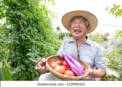 Senior men who are pleased with the harvest of home garden