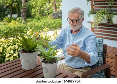 Senior old man eldery puring water and taking care small tree on table