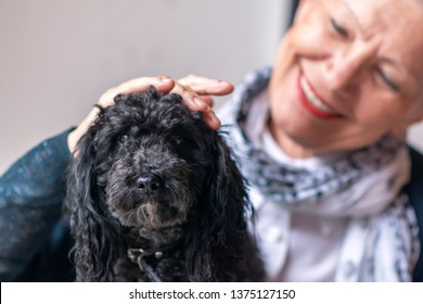 A senior old woman petting her puppy, a black mini poodle, smiling and enjoying its company