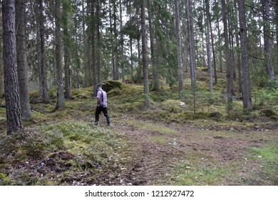 Senior walks in a beautiful coniferous forest