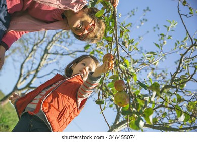 Senior woman and adorable little girl picking fresh organic apples from the tree in a sunny autumn day. Grandparents and grandchildren leisure time concept.