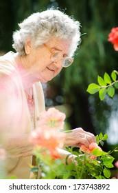 Senior woman with garden roses. Springtime
