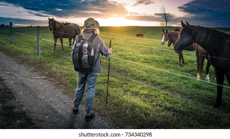 A senior woman hiking past horses in a pasture on a gravel path at sunset.