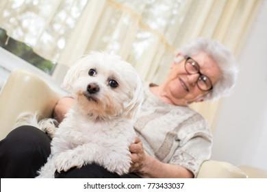 Lap Dog Images Stock Photos Vectors Shutterstock