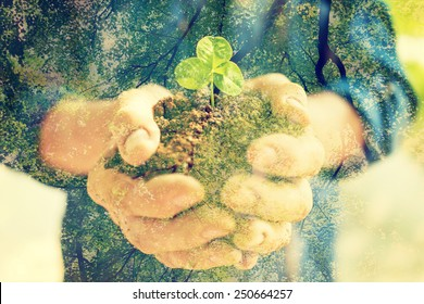 Senior woman holding young spring plant in hands for ecology and agriculture concept