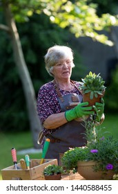 Senior woman potting plants and working in garden in spring time