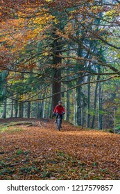 senior woman riding her e-mountainbike on a challenging trail in colorful indian summer forest in the Allgaeu area of the bavarian alps near Immenstadt, Germany