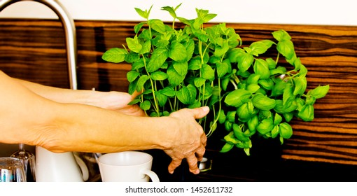 Senior woman using herbs ans spices for preparing food in the kitchen.