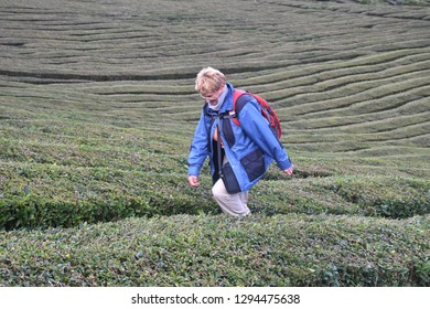 Senior woman walking tea fields Cha Gorreana, Azores, Portugal