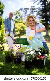 Senior woman watering flower plant in the park and senior man with wheelbarrow in background