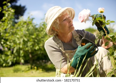 Senior woman wearing sun hat checking flowers in garden outdoors. Copy space.