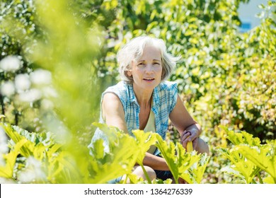 Senior woman working in her garden in summer