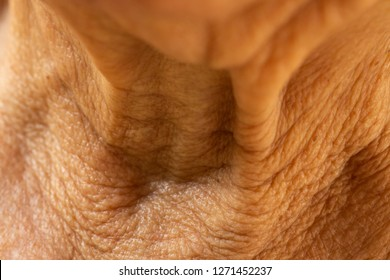 Senior woman's wrinkled neck, Medicine, Close up & Macro shot, Selective focus, Asian Body skin part, Healthcare concept