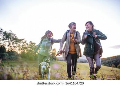 Senior women friends with dog on walk outdoors in nature.