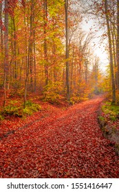 Sensational autumn landscape at sunset. Red leaves pouring from the trees cover the pathway in the forest. Uludag, Bursa, Turkey.