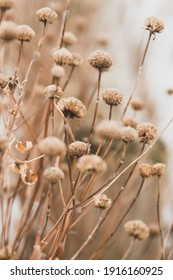 Sensual delicate beige background: delicate dry flower in winter in February in Chicago