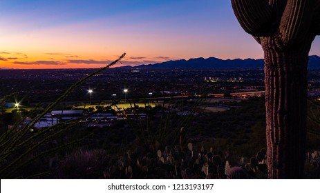 A sentinel of the desert a saguaro cactus, prickly pear cacti and ocotillo watch over a beautiful sunset in Oro Valley, Arizona, while a high school  football game plays in the evening light. 2018.