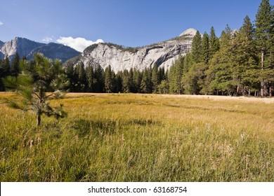 Sentinel Meadow in Yosemite Valley, Yosemite National Park, California, U.S.A.