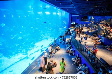 Sentosa, Sinapore : Oct 14, 2017 - Tourism travel to under water world at Sentosa, Singapore.