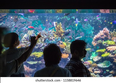 Sentosa, Singapore - March 2, 2018 - Tourist looking at a beautiful tropical fish tank at S.E.A. Aquarium