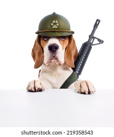 The sentry dog in a helmet , isolated on white background