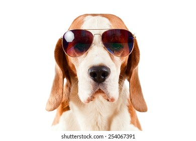 sentry dog in sunglasses, isolated on white