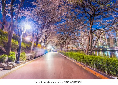 Seokchon Lake park at night and cherry blossom of Spring in Seoul, South Korea