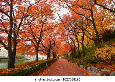 Seokchon Lake and Red Leaf