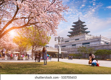 SEOUL - APRIL 10, 2016: Gyeongbokgung Palace with Cherry Blossom in Spring Travel of korea, April 10, 2016 in Seoul, South Korea.
