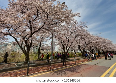 SEOUL, KOREA-APRIL 19: The ninth Yeouido Spring Flower Festival is being held in Yeouiseo-ro on April 19, 2013 in Seoul, Korea. Visitors are enjoying the blossoms.