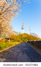 Seoul, South Korea - April 17, 2015: Walking path lined by colorful blossoming pink cherry blossom tree and city wall lead to Namsan Tower or N Seoul Tower on a spring evening in Republic of Korea