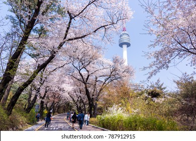 Seoul, South Korea - April, 2017: Spring in Namsan park, People enjoying Cherry Blossom.