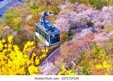 Seoul, South Korea - April 4, 2018 : View of the cherry blossoms on the hill with the cable car passing through in Seoul on April 4, 2018.