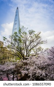Seoul, South Korea - April 6, 2018: Cherry blossom along the lake side park of Lotte World Magic Island.