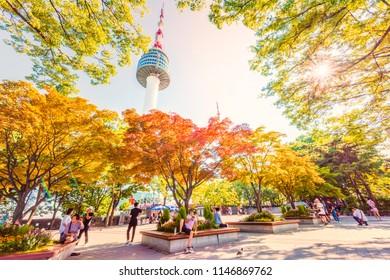 Maple-key Images, Stock Photos & Vectors | Shutterstock