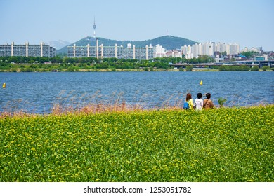 Seoul, South Korea - May 4, 2018: Spring view of Hangang river in Seoul. Three women are taking a walk along the riverside where canola flowers are in full blooms. Hangang river goes through Seoul.