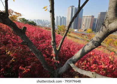 SEOUL, SOUTH KOREA - OCTOBER 28, 2017: Namsan Park in autumn with skyline backdrop on October 28, 2017 in Seoul.