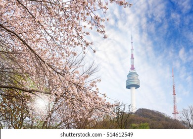seoul tower, city in spring with cherry blossom tree in full bloom, south korea.