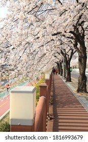 Seoul's Dobongsan Mountain in Korea and the azalea azalea, cherry blossoms, and rape flowers blooming in the city and countryside.