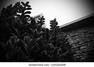 Sep.27.2018. Tokyo Baptist Church, Daikanyama, Minami Shibuya, Shibuya Ward, Tokyo, Japan. The trees that cover the block wall of the outer wall.
