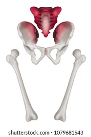 Separate Human Hip and femur bone anterior view red highlight on sacrum and sacroiliac joint pain- Medical illustration- Healthcare- Human Anatomy and Medical Concept- Isolated white background.