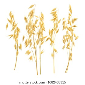 Separate oat ears set. Isolated on white background. Package design elements with clipping path