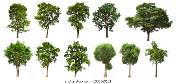A separate tree is located on a white background.