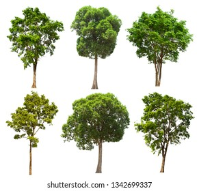 Separate tree series, large lacking images, suitable for all types of applications