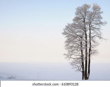 Separately standing tree near the lake in winter