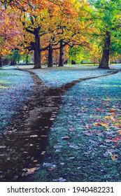 Separation of the dark autumn footpath in the park. Autumn landscape