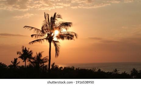 Sephia sun behind coconut tree