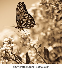 Sepia Butterfly
