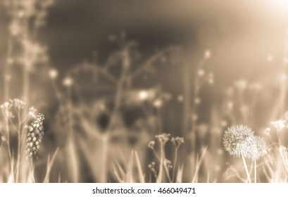 Sepia effect beautiful summer background with field flowers and plants. Autumn flowers background. Fall sepia vintage concept. Sepia photo of meadow, lawn plants, grass.