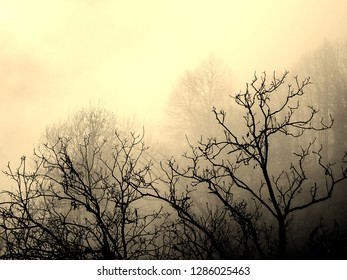 Sepia of a Group of Trees with Leafless Branches and Fog in the Rural Village of Loco in the Osernone Valley, Ticino, Switzerland in Autumn